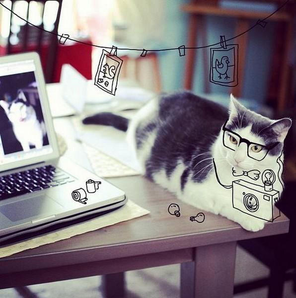 Как подписать в инстаграме с котом